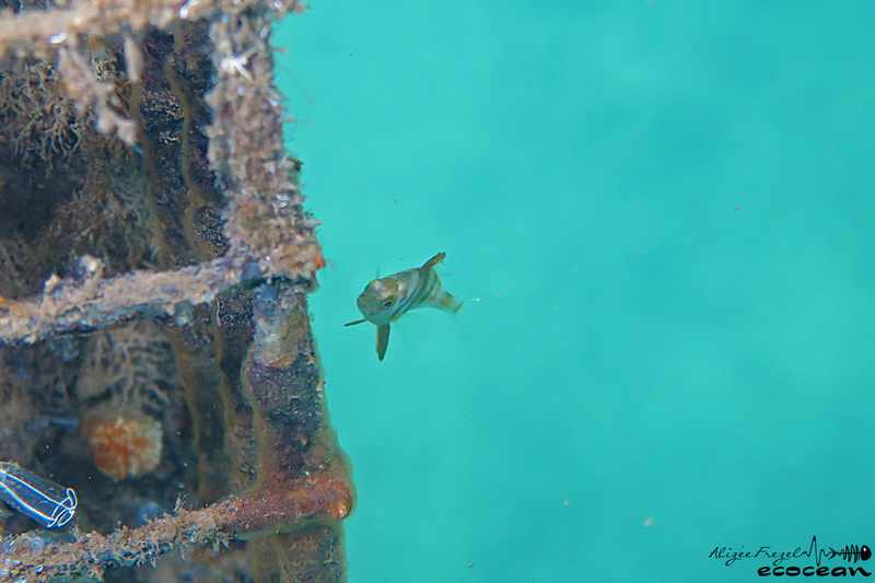 Ecocean – Suivi Respire
