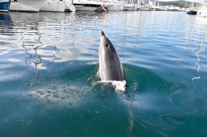 Un dauphin en escale au port